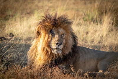 Scar with bed head