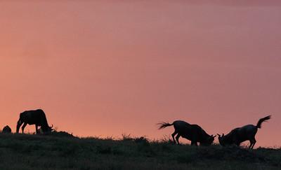 wildebash