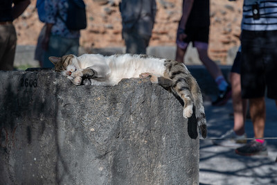 One of many cats snoozing on the grounds of ancient Delphi, Greece.