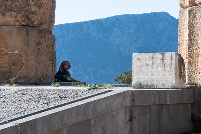 A dog rests in the shade of the Temple of Apollo, ancient Delphi, Greece.
