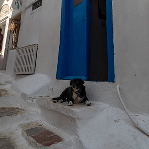 A lazy dog on a doorstep in Hydra, Greece.