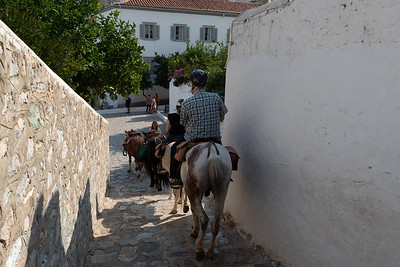 Harriet's Hydra Horses, in Hydra, Greece.