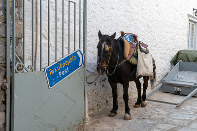 A horse waits for work near the post office in Hydra, Greece.  Curiously, it bears a Handicap sign.