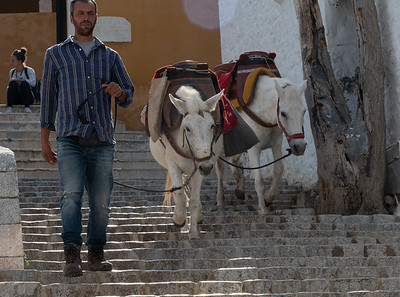 A man returns with his horses after delivering cargo high in the streets of Hydra, Greece.