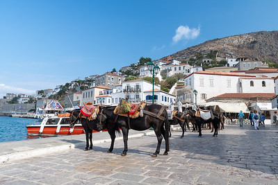 Horses and mules await service as taxis in Hydra, Greece.