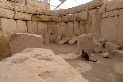 A cat explores the Hagar Qim temple, near Valleta, Malta.