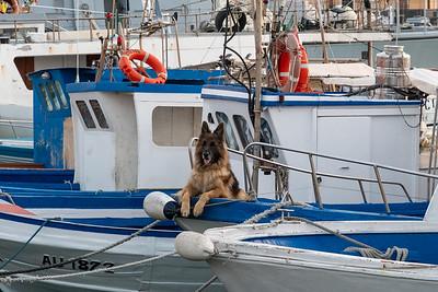 Harbor scene, Catania, Sicily.