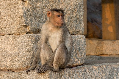 A monkey awaits Sunset from Hemakuta Hill, Hampi.
