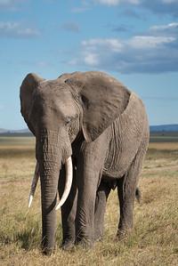 """The elephant's a gentleman."" -Rudyard Kipling"