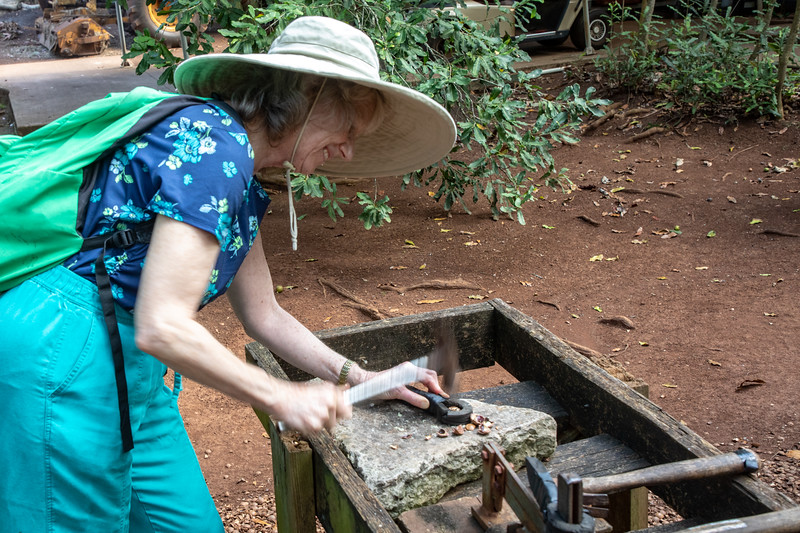 Shelling nuts at Purdy's Natural Macadamia Nut Farm