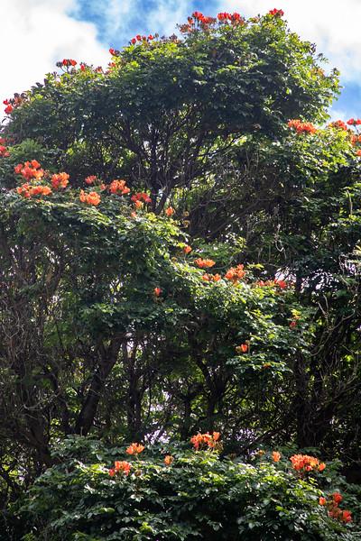Halawa Park, Molokai