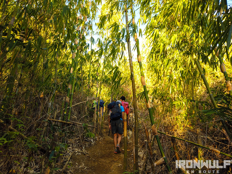 Bamboo trail at the start of the climb