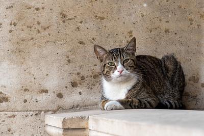 Le chat du Louvre.