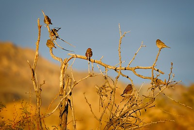 Finches and Sparrows Evening Light