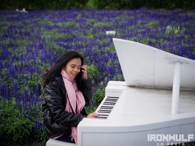 Piano amidst the lavender field
