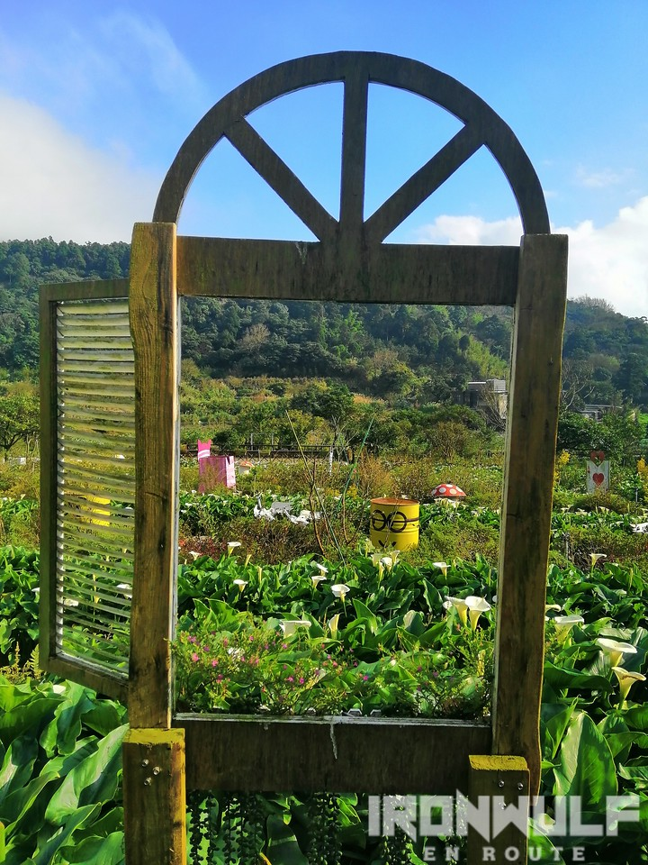 Calla Lily garden window frame