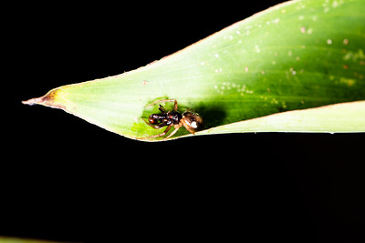 INSECT - ant jungle-0556