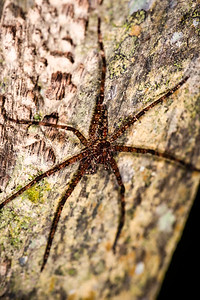 ARTHROPOD - Spider-0579