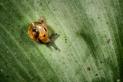 MOLLUSC - snail-0563