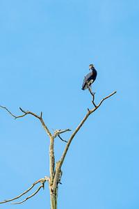 BIRD - stork - Storm's-1629