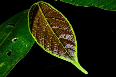 LANDSCAPE - flora - leaf-1277