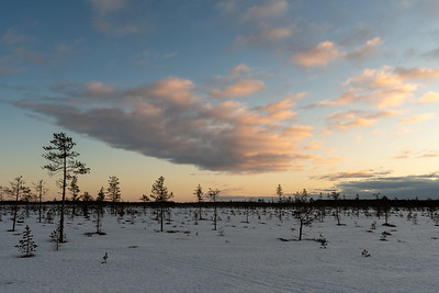 Late afternoon light in the wetlands outside Oulu.