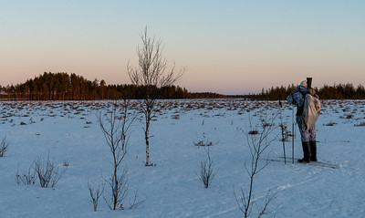 Timo scanning for grouse in the wetlands outside Oulu.