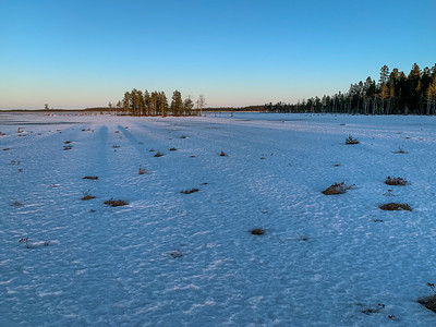 Long shadows across the wetlands outside Oulu, on our grouse hunt.