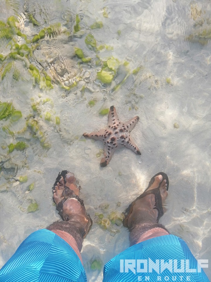 One of the many starfish