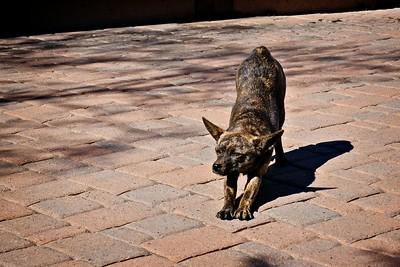 Stray dog at Xavier Mission