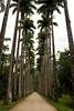 <h3>Botanical Garden in Rio de Janeiro</h3>This was the first walk way we came to as we entered the garden.