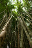 <h2>Botanical Garden</h2>This is bamboo.