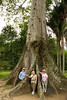 "<h3>Botanical Garden in Rio de Janeiro</h3>The sign in front of the tree said ""sumauma""."