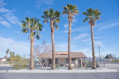 4 Palms on Street