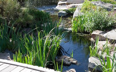 Denver arboretum Japanese garden
