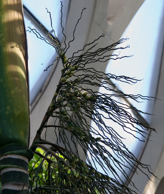 Denver arboretum, tropical garden