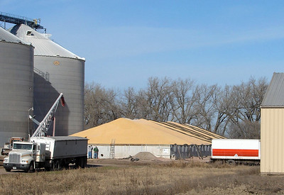 November 27, 2009 12:15 PM: Thanks to a bumper crop of corn in Minnesota and South Dakota, grain elevators were overflowing and corn was being stored on the ground until it could be hauled to market.