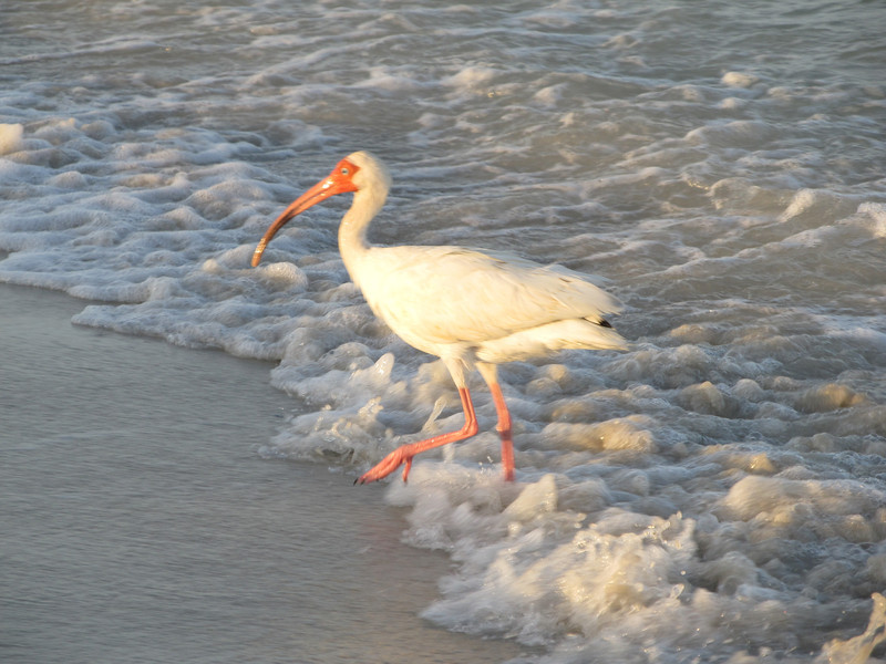 Wildlife, Naples Florida June 2012 Copyright Sue Steinbrook