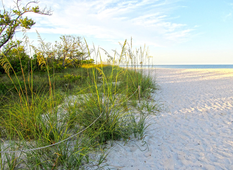 Beach, Naples Florida June 2012 Copyright Sue Steinbrook