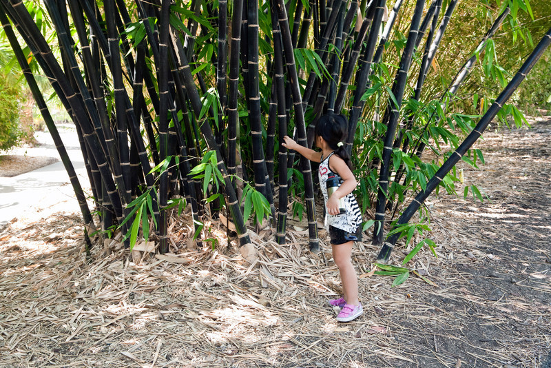 Lexi checking out the black bamboo.