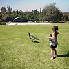 Lexi trying to follow the peacock.