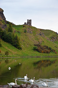 Swans at St. Margaret's Loch