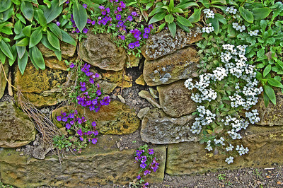 Spring flowers on a rockery inside the Castle, adding some colour on a grey day