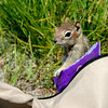 A chipmunk makes itself at home in Candy Greenfield's purse.<br /> A handfull of fishermen had a quiet day at Gross Reservoir on Wednesday.<br /> Cliff Grassmick / July 6, 2011