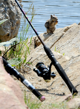 Chipmunks and humans work side by side at the reservoir.<br /> A handfull of fishermen had a quiet day at Gross Reservoir on Wednesday.<br /> Cliff Grassmick / July 6, 2011