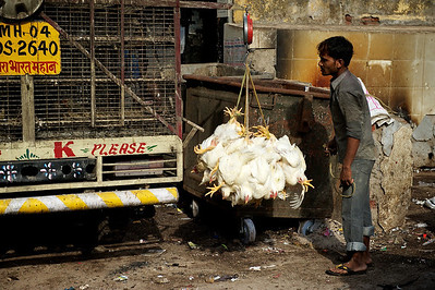 Chicken per kilogram, Dharavi.