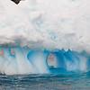 2018 Antarctica-37