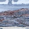 2018 Antarctica-57