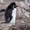 2018 Falkland Islands-5