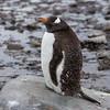 2018 Antarctica-35